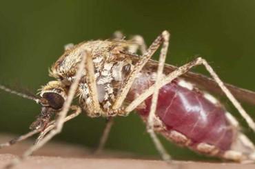 New malaria vaccine generates robust immune response