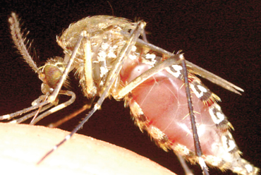 UK sets up £1bn fund to fight malaria