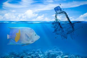 Recyclable, sustainable petroleum-free bioplastics