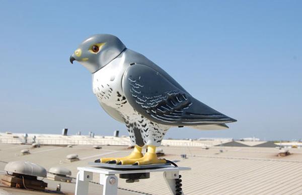 Robotic falcon