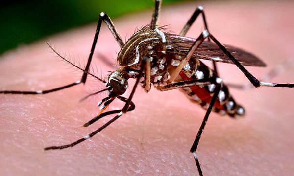 India prepares for Zika virus