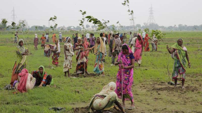 India planted nearly 50 million trees in 24 hours on July 11, 2016 creating a new Guinness World Record