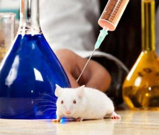 Researchers successfully grow hair on damaged skin of mice