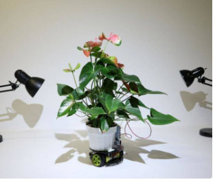 Indian researcher makes robot plant that chases light