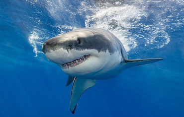 Climate change is making sharks 'right-handed'