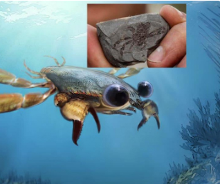 New 95 million-year-old 'cartoon-eyed' crab species found