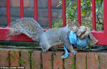 Heartbreaking photos of a squirrel using PLASTIC BAGS