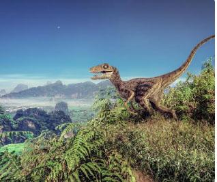 Fossils of dinosaur species that had limbs like birds found