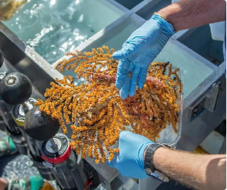 30 species of marine invertebrates discovered in Galapagos Islands